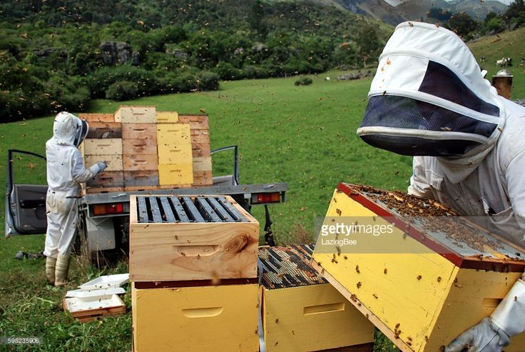 Commercial Beekeepers working on their Beehives. It's time to load the honey harvest. Boxes of full frames of honey are loaded on a vehicle to be taken to the extraction shed.