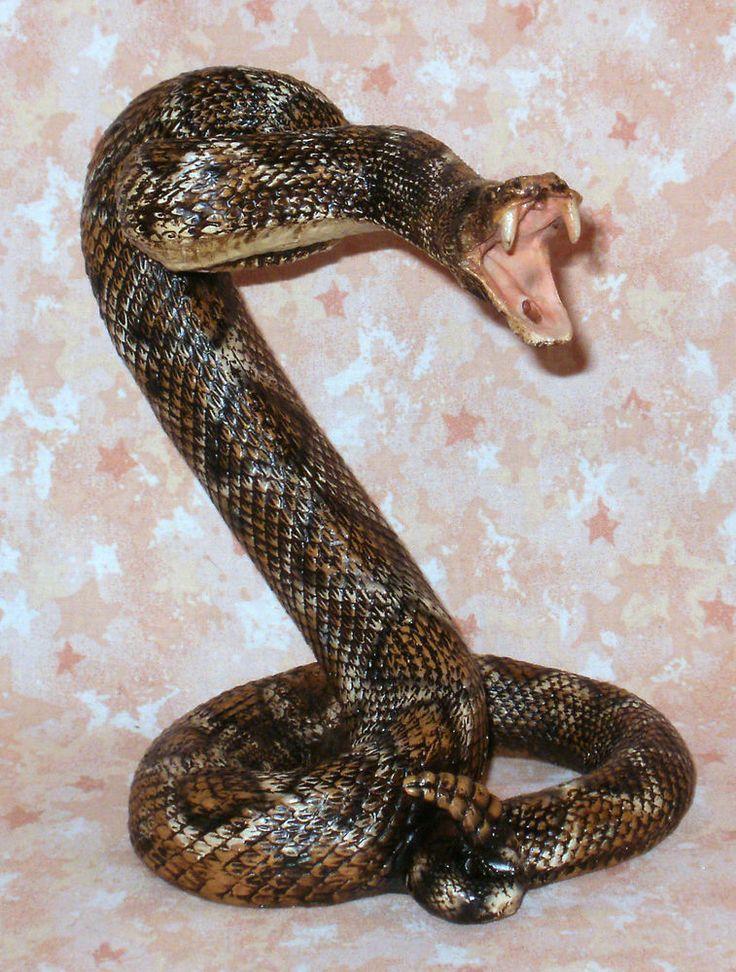 NEW~Realistic Diamondback Rattlesnake Coiled to Strike ...  Western