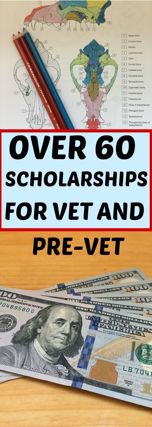 Over 50 Veterinary School Scholarships listed here.  Scholarships and free money for Veterinary residents and students.  #scholarships #collegescholarships #vetstudent #vettechlife #veterinaryscholarships #freemoney #vetschool