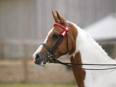 Pferdemarkt - Pferde kaufen und verkaufen - pferde.de