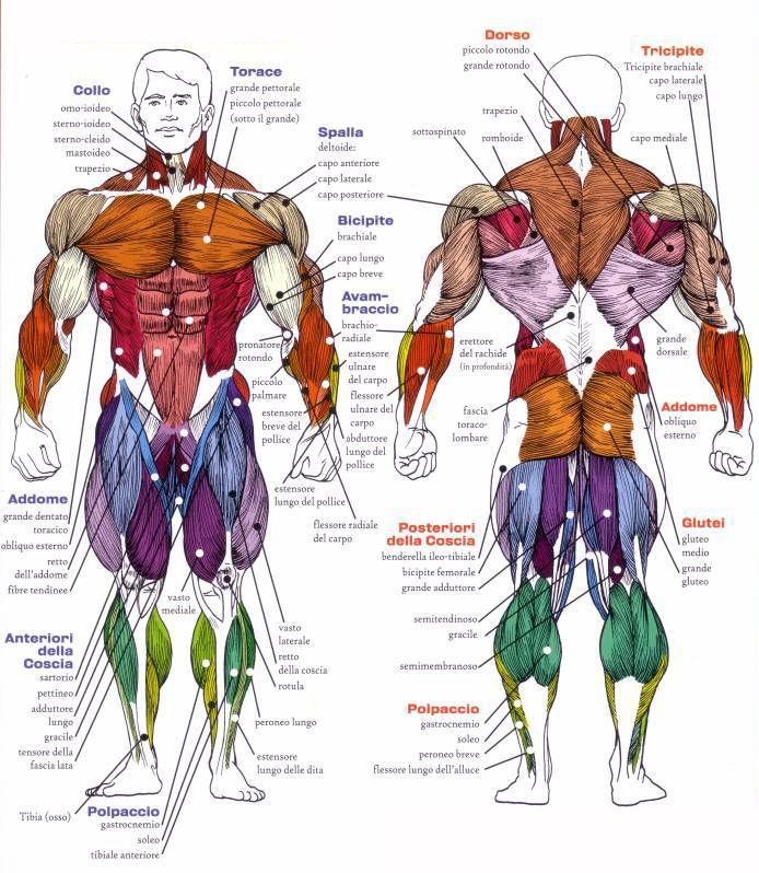 Tecniche in energia muscolare | Studio Le Maree