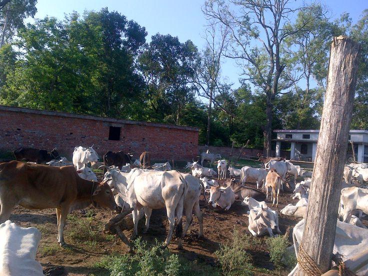 Uttar Pradesh India