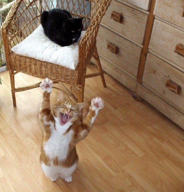 Funny Cats – 30 Pics