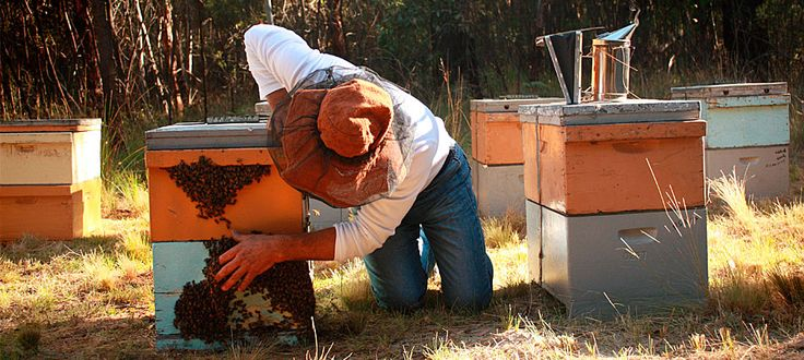 With concern over the future of bees, Jeffrey compiled an award-winning paper – Neonicotinoids in Australia which was published in Australasian Beekeeper Journal 2011-2012.