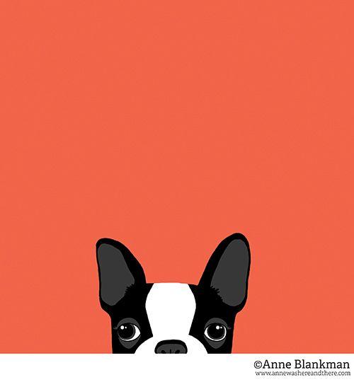 Boston Terrier Peek Portrait ©Anne Blankman www.annewashereandthere.com/blog