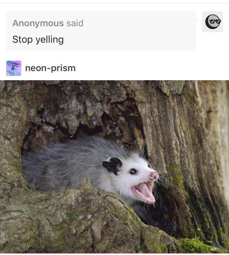 Possum image by catherine ferguson on funny Awesome