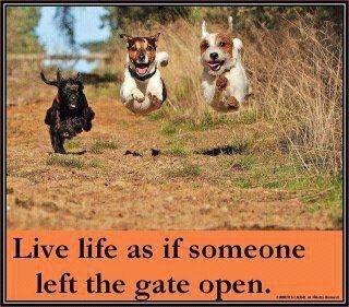 Yeehaw!: Life Is Shorts, Aww, Dogs, Inspiration, Doggies Dudes, Living Life, Animal Pet, Amazing Animal, Running Away