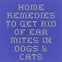 Home Remedies to Get Rid of Ear Mites in Dogs & Cats