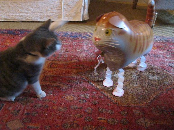 Birthday balloon attack...