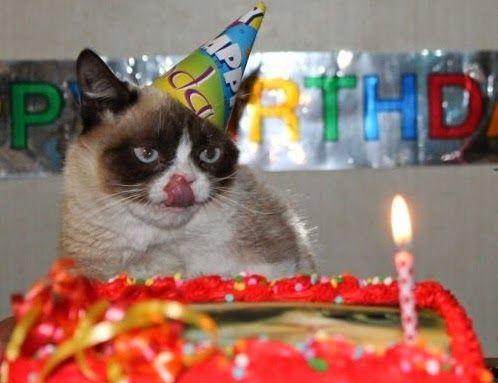 Nuestro gato es un gruñón. Mirad hasta en el día de su cumpleaños...