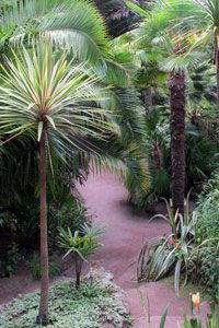1000 ideas about jardin exotique on pinterest back for Plante bambou exterieur