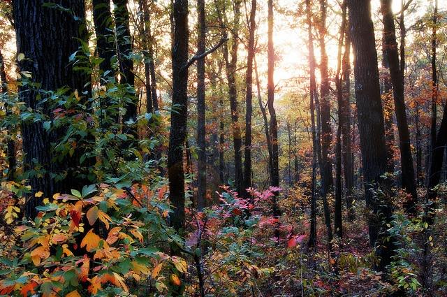 Ozarks in the Fall by snolic...linda, via Flickr