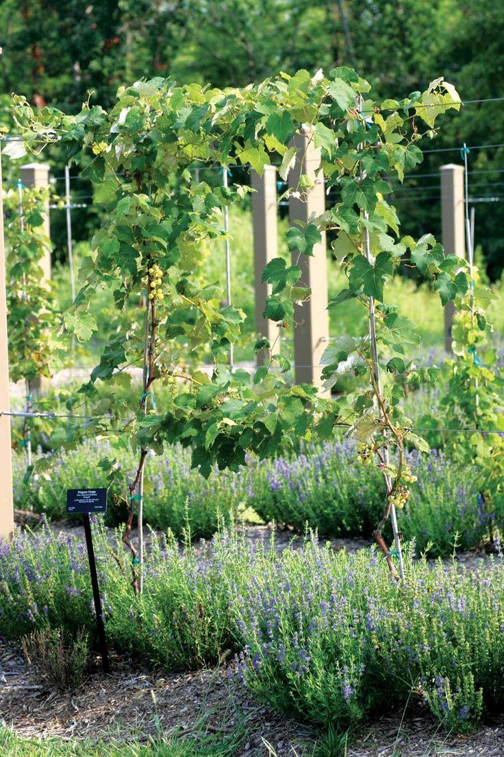 134 best Edible Landscaping images on Pinterest | Flower gardening ...
