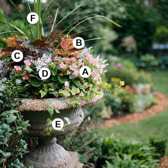 A. Wax begonia (Begonia 'Bayou Pink') -- 3   B. Coleus (Solenostemon 'Christmas Candy') -- 2  C. Coral bells (Heuchera 'Palace Purple') -- 1  D. Dusty miller (Senecio 'Silver Dust') -- 3  E. Ivy (Hedera helix 'Eva')  F. Dracaena marginata -- 1