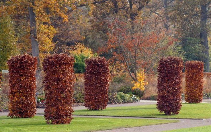RHS Garden Wisley - beech columns.