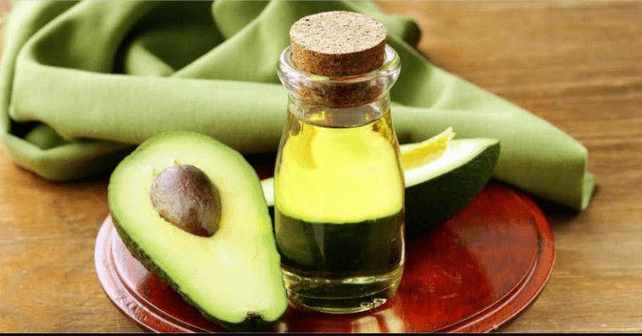 Το αβοκάντο είναι ένα αείφυλλο, πολυετές φυτό που διατηρεί το φύλλωμά του, με συνεχή ανανέωση των φύλλων του, σε όλη τη διάρκεια του έτους.