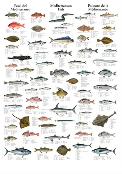 35 best images about Identify that fish... on Pinterest ...
