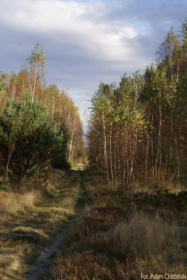 Poleski Park Narodowy - Perehod