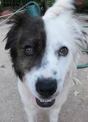 Free Dog Adoption Memphis Tn