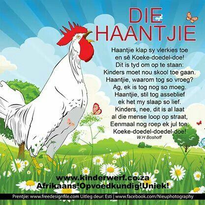 Haantjie