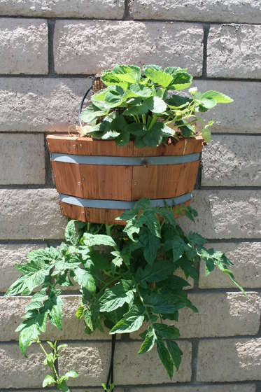 How to build an attractive, space saving upside down planter. by pagan209, instructables #Garden #Upside_Down_Planter #instructables #pagan209Gardens Fun, Gardens Ideas, Saving Upside, Spaces Saving, Tomatoes Upside, Topsy Turvy, Growing Tomatoes, Space Saving, Gardens Growing
