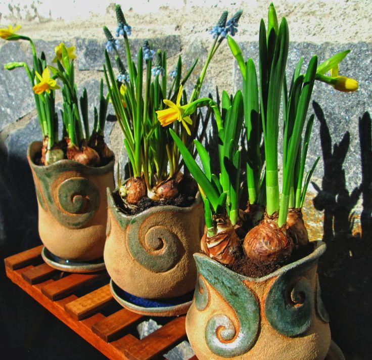 Narcisos macetas originales tendencias en decoraci n - Decoracion con macetas ...