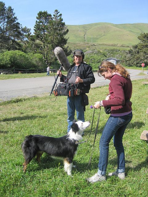 A photo from Nutro's taping of the Natural Choice Dog Food commercial featuring Buddy the Border Collie. You have got to see it, It brings it right home and to the point. Nutro Natural Choice Dog Food is made with all natural ingredients that have be Dogs suffer from allergies very similar as we do, Could you spot a dog with allergies..