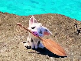 Pua from moana Cuteee