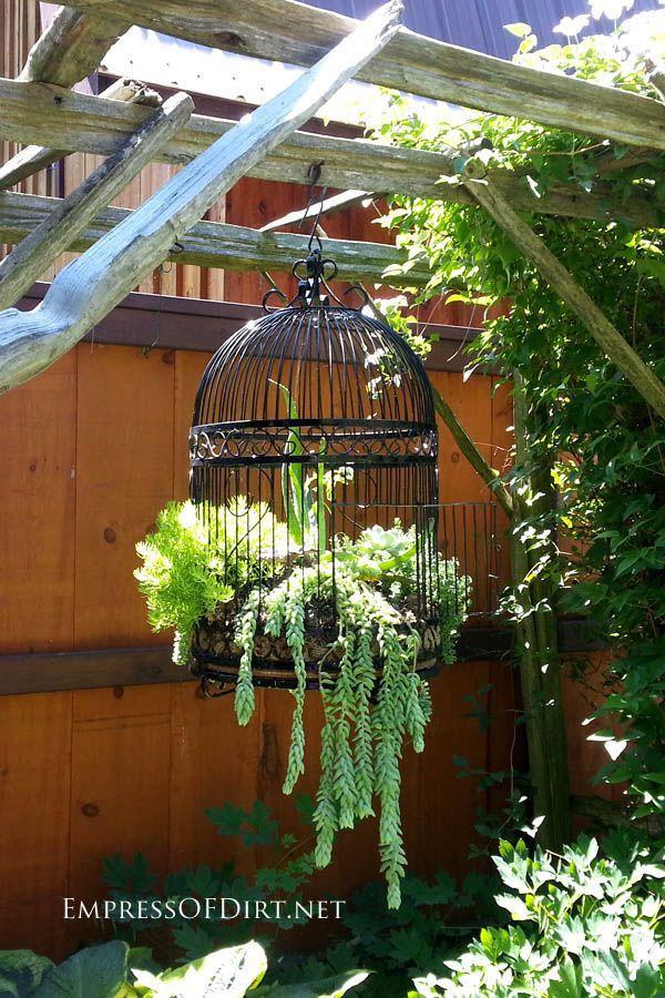 Creative DIY garden container ideas   repurposed birdcage with succulents