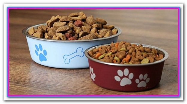 Best Holistic Dog Food For Pancreatitis Dog Food Recipes Food