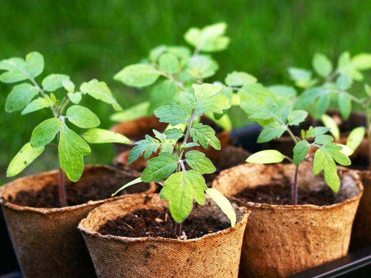 Когда сажать рассаду в 2018 году - календарь посадки рассады