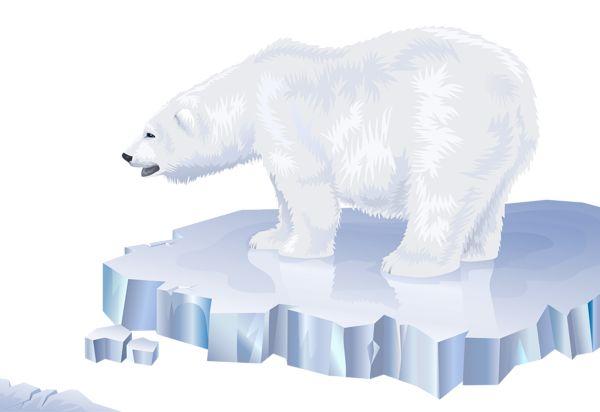 White Bear Transparent PNG Clip Art Image
