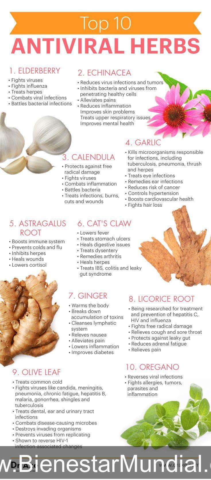 Top 10 antiviral herbs - Dr. Axe #nutrition #fitness #workout #weightloss