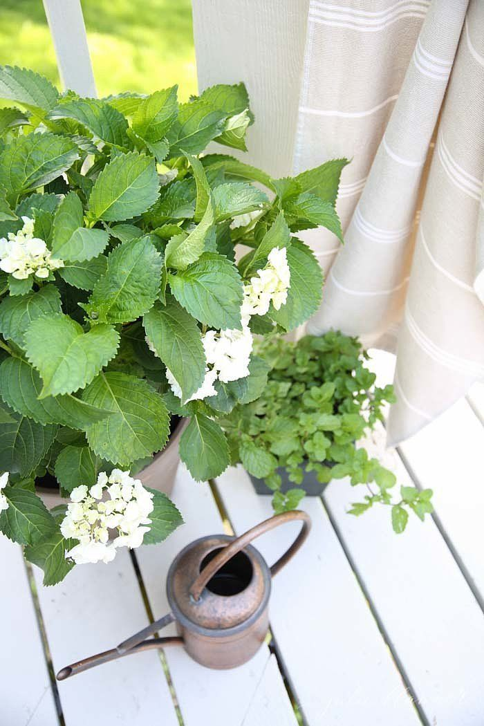 Keep the pests away with these fresh mosquito-repellent plants and flowers.