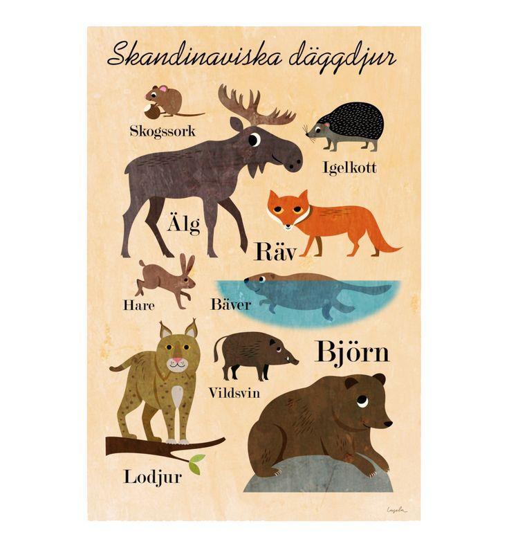 Skandinaviska däggdjur, Omm design