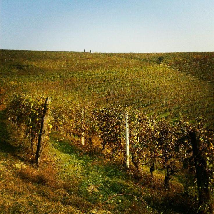 Valentina Casetta 25 Gen  #IlMioPiemontePreferito sono i vigneti del #monferrato, la passione dei suoi produttori e l'eccellenza dei suoi vini.