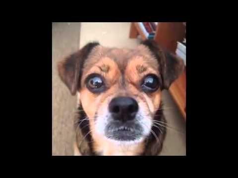 17 best idee su video divertenti di cani su pinterest for I cani youtube