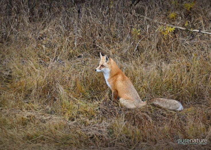 Shot me a Fox!