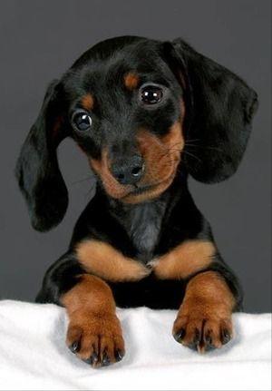 どうして必要なの?-登録と狂犬病予防注射-|「Dog Safety 倶楽部 」のファンがつくるサイト