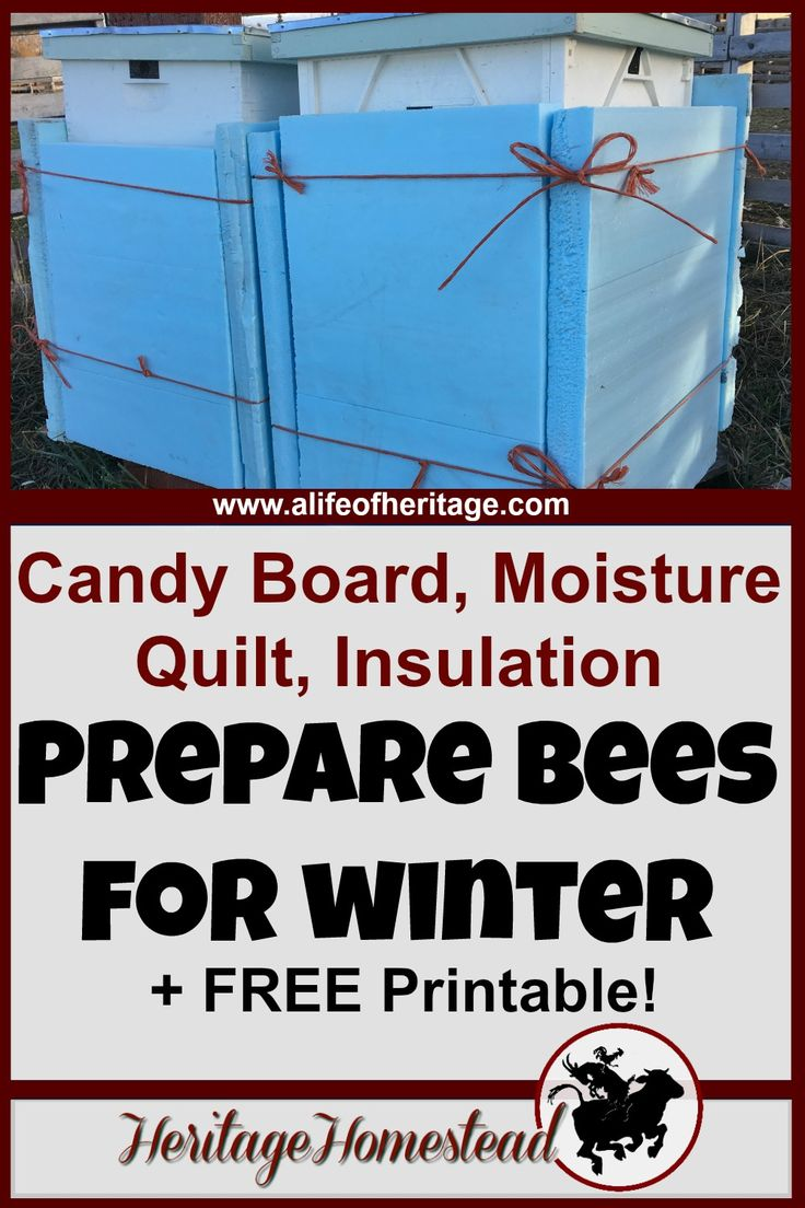 Bees   Winter Bees   Winter Bee Food   Do you have really cold, wet winters? Then you should consider making a candy board, moisture quilt and wrapping your hive with insulation. This how-to article with detailed pictures will show you exactly how to make them so you can help your bees through winter. Bees   Winterizing a bee hive   How to bees