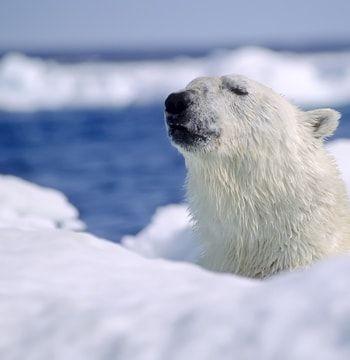 la prise de conscience climatique a été l'un des tournants de la décennie.