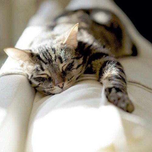 Wish all furr babies can be as comfy as this one..