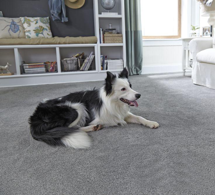 Coles Fine Flooring San Diego Carpets Hardwood Flooring And More Blog Grey Carpet Runner Pet Friendly Carpets Carpet