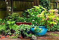 Piante sempreverdi: 10 piante che dureranno per sempre
