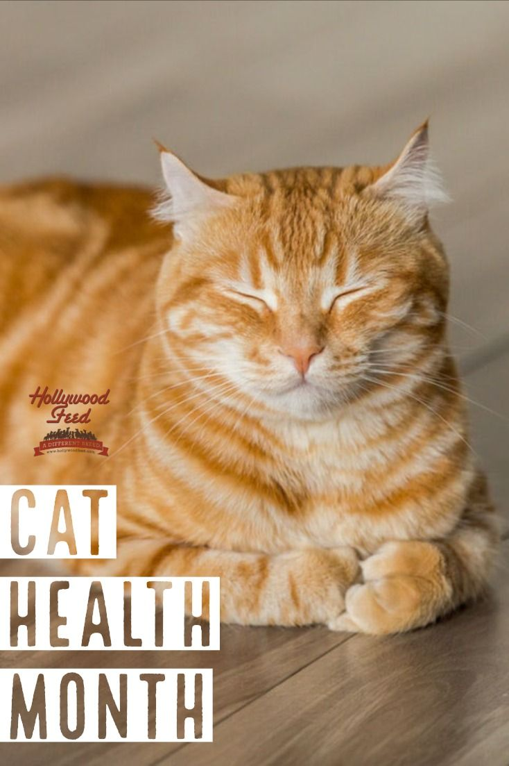 February Is Cat Health Month Loving Your Cat Means Caring For His Or Her Health And Or Blog Post Can Help You Do Just That Cats Cat Health Natural Cat Litter