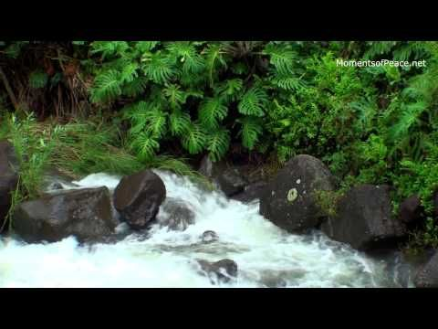 Calm Music: Most Relaxing Music, New Age for Meditation,Yoga,Massage & Deep Sleep N°31 > Ruhige Musik, Tiefschlaf Nr. 31