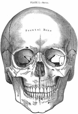 Beautiful etching of a scull