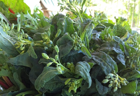 How to Ensure Your Kale Provide Buds Month after Month