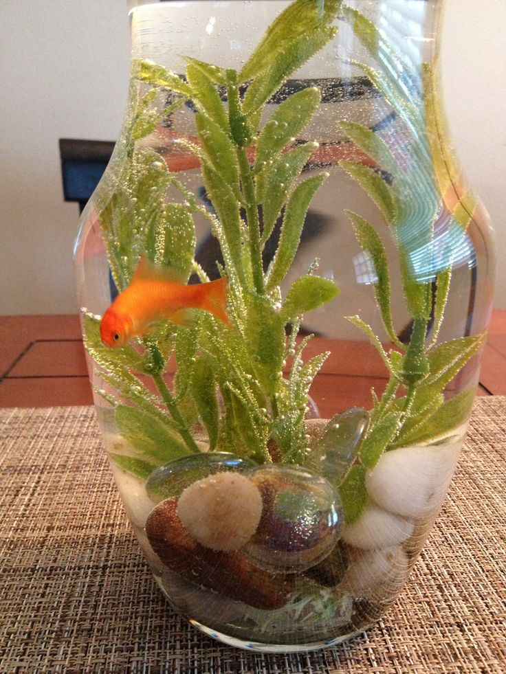 38 best images about fish bowl ideas on pinterest for Fish bowl ideas
