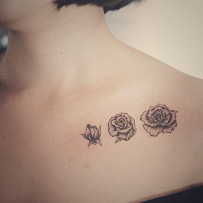 blooming rose bud